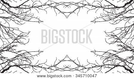 Beautiful Background For Text. Frame From Bare Branches Trees. Applied Clipping Mask. Vector Illustr