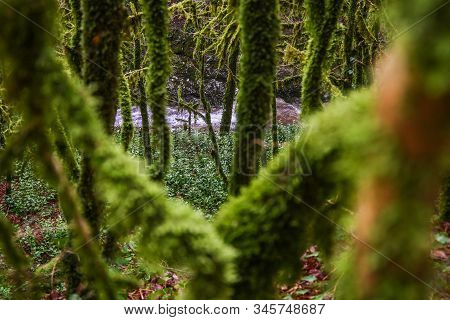Green Subtropical Branches, Nature, Abkhazia, In A Fairy Forest