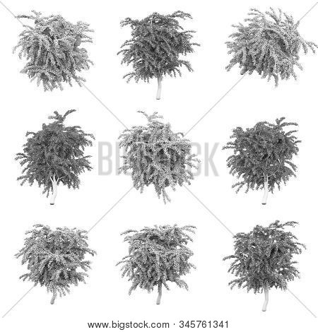 Tree Isolated On The White Background 3d Rendering