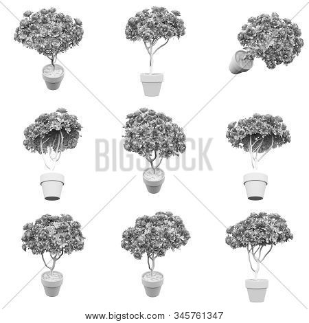 Flower Isolated On The White Background 3d Rendering