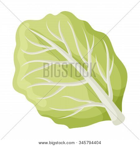 Leaf Of Cabbage Vector Icon.cartoon Vector Icon Isolated On White Background Leaf Of Cabbage .