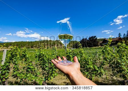 A Glass Of Clear White Wine On The Hand Against Beautiful View Of Okanagan Valley Grapevines Vineyar