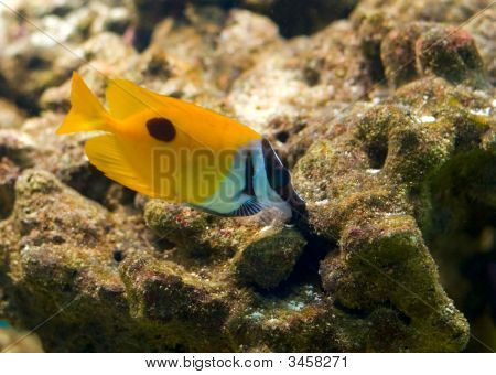 Colorful Tropical Fish On A Reef