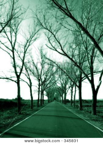 Road And Trees In Green