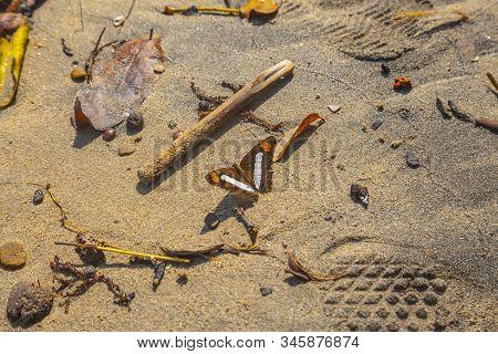 A Butterfly On The Beach Of Puerto Caribe In Punta De Sal In The Caribbean Sea, Tela. Honduras