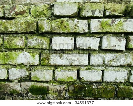 White Brick Wall With Green Moss. Old Texture. Grunge Brickwall Surface