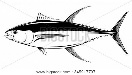 Yellowfin Tuna Fish In Side View In Black And White Isolated Illustration, Realistic Sea Fish Illust