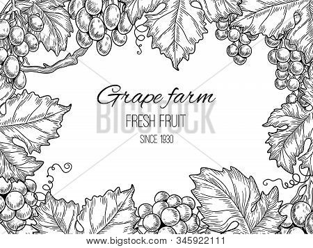 Grape Frame. Vineyard Vintage Vector Background With Grapevine And Leaves. Illustration Farm Grapevi