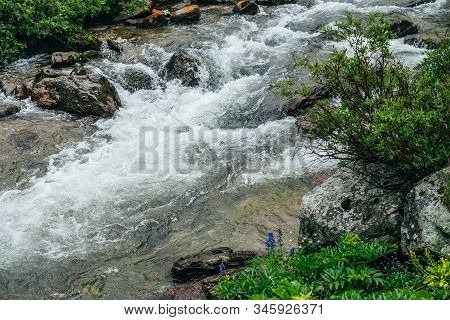 Wonderful Scenic Background With Rich Flora Near Mountain River. Atmospheric Highland Backdrop With
