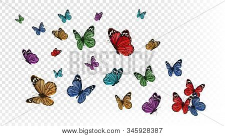 Flying Butterflies. Colorful Butterfly Isolated On Transparent Background. Spring And Summer Insects