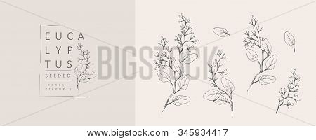 Seeded Eucalyptus Logo And Branch. Hand Drawn Wedding Herb, Plant And Monogram With Elegant Leaves F