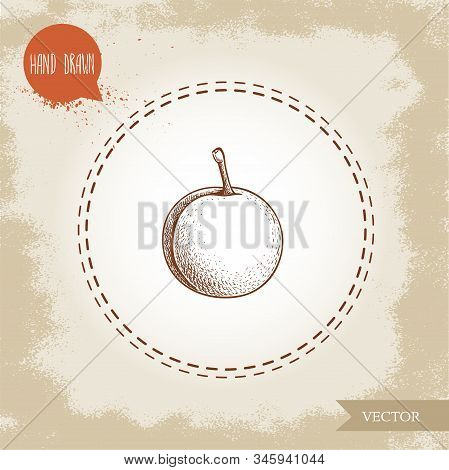 Hand Drawn Sketch Style Yellow Plum Mirabelle. Single Whole Fruit Isolated On Retro Background. Vect