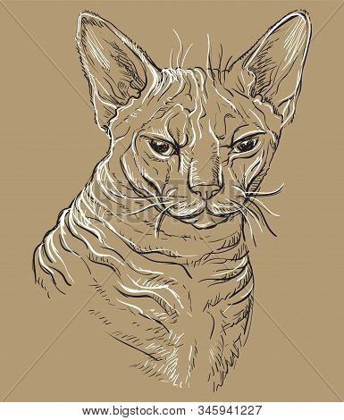 Vector Hand Drawing Portrait Of Angry Sphinx Cat In Black And White Colors Isolated On Beige Backgro