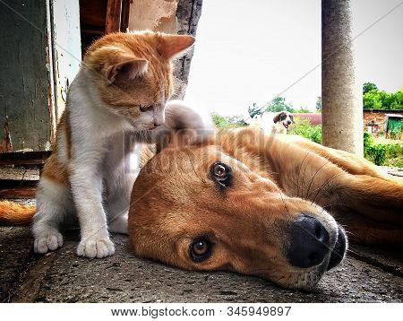 Dog And Kitten Playing In The Yard. Dog And Kitten Live Together Freely. Phone Photography.best Frie