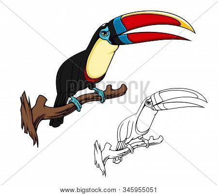 Toucan Exotic Bird Vector Cartoon Mascot, Bird Of Tropical Forest Or Jungle. Citron Throated Toucan