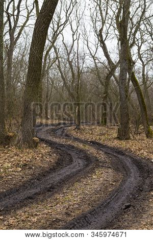 Spring Nature. Early Spring In Foggy Forest. A Winding Black Dirt Road Winds Among Leafless Deciduou