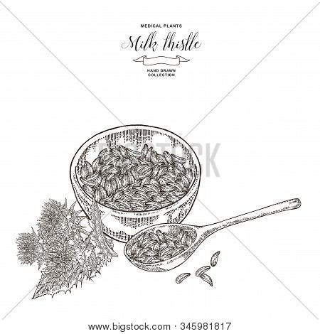 Milk Thistle Plant Hand Drawn. Thistle Flowers And Seeds With Wooden Bowl. Mediccal Gerbs Collection