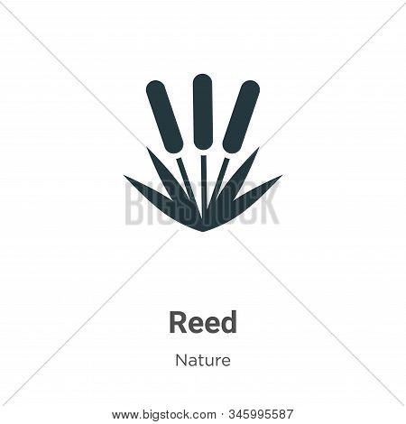 Reed icon isolated on white background from nature collection. Reed icon trendy and modern Reed symb