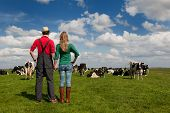 Typical Dutch landscape with farmers couple black and white cows in the meadows poster