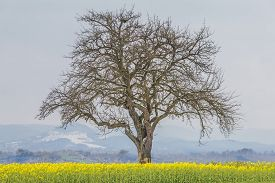 Climate Change Scene Of Winter Tree In Spring Summer Landscape. Global Warming Weather With Single B