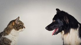 The Eternal Duel Between Dog And Cat For The Title Of The Best Pet. Kitten Vs Puppy Rivalry, Standin