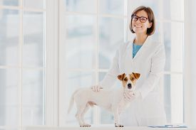 Animal Care And Health. Indoor Shot Of Woman Vet In White Gown And Medical Gloves, Stands Near Exami