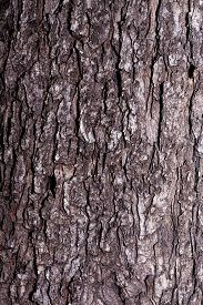 The Texture Of The Tree Bark Is Gray. Stock Photo Background Bark Close-up.