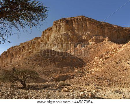 Akazien am unteren Rand der Wüste Hügel bei Sonnenuntergang