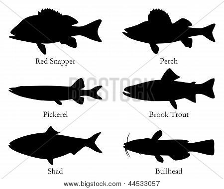 Detailed and accurate illustration of north American food fish poster