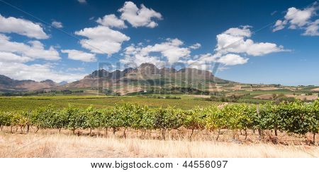 Wine Route, Stellenbosch, South Africa