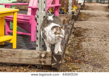 Mewing cat on spring day, wooden chairs on background poster