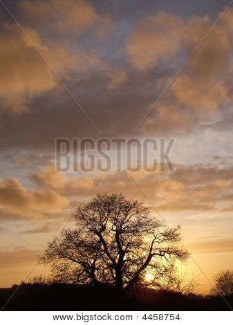 Tree Silhouette In Golden Sunset