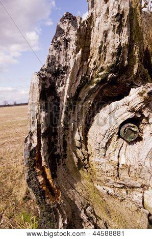 Camouflage Geocache Hidden in a Tree