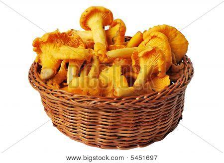 Chanterelles In Basket