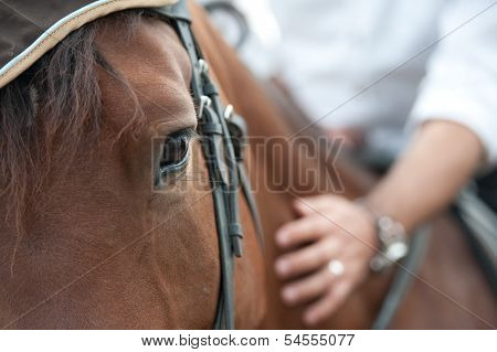 closeup of a horse head with detail on the eye and on rider hand. harnessed horse being lead