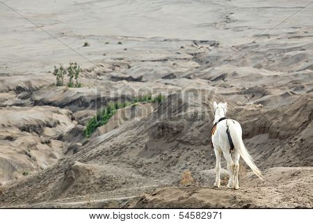 White horse stand at Desert Sand Dune Mountain Landscape of Bromo Volcano crater, East Java Island Indonesia (Selective focus at hourse)