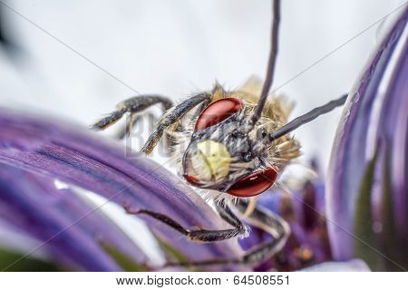 Insect In The Flower
