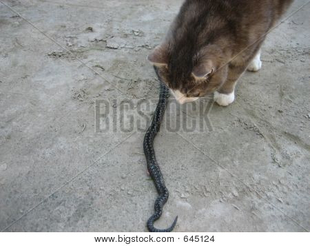 A Cat And A Snake