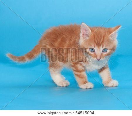 Auburn Incredulous Kitten On Blue