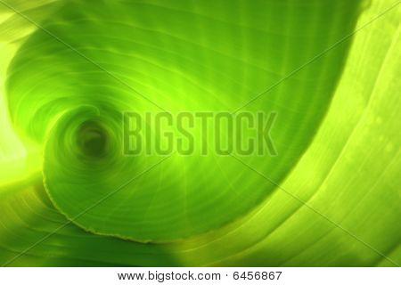 Banana Leaf Inner