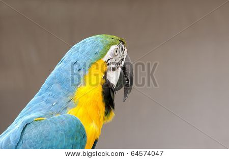 Closeup of a beautiful macaw