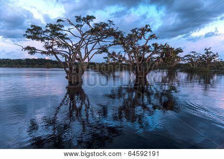 Amazonian Rainforest. Laguna Grande, National Park Cuyabeno. Ecuador