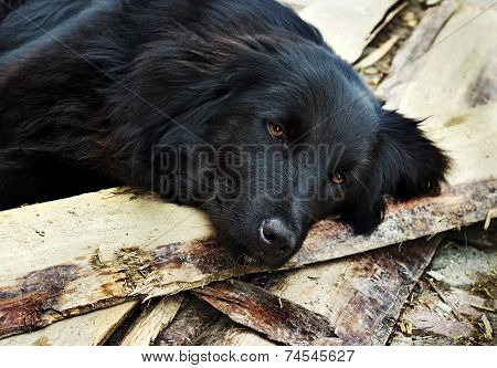 Lonely black dog with sad eyes is laying and waiting someone on outdoors poster