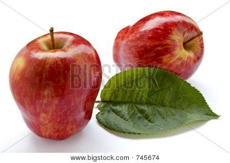 Rich apple crop