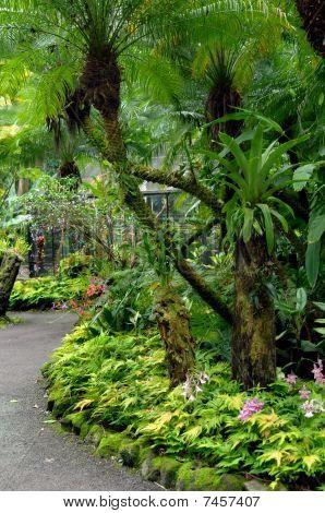 Curving Tropical Garden