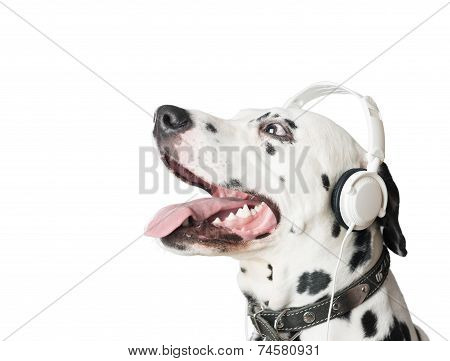 poster of Dalmatian dog with open mouth headphones and leather collar. Dog in profile looking up. Dog tongue and fangs visible. Listening music.