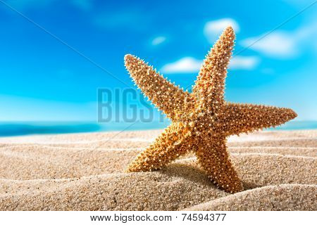 beautiful  fishstar on the sandy beach. Holiday concept