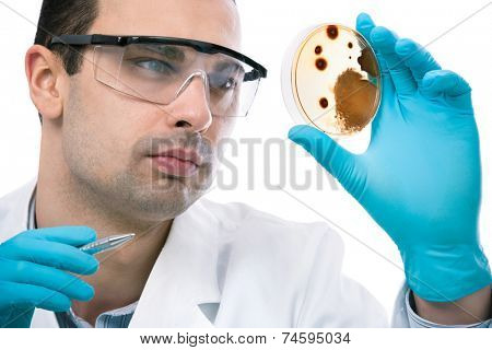 Scientist observing petri dish at the laboratory