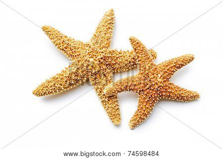 red sea stars isolated on white background