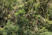 Brazil - jungle in Parana region. Rainforest nature. poster
